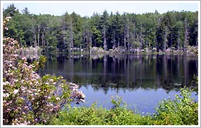 Photograph of Batchelder Pond surrounded by trees and flowers and reflecting blue sky.